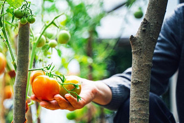 corso colture vegetali arboree foligno