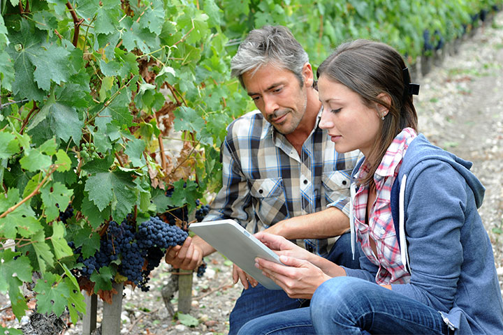 corso operatore viticultura foligno